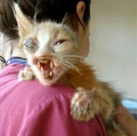 На этого изуродованного котенка нельзя было смотреть без слёз