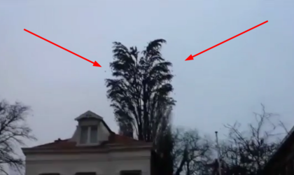 Он просто снимал дерево на видео. Но вдруг произошло нечто очень неожиданное!