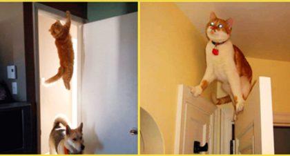 12 котов, которые поняли, что хуже быть не может