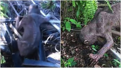 Испуганные жители деревни избили «внеземное» существо! Поистине душераздирающая история!