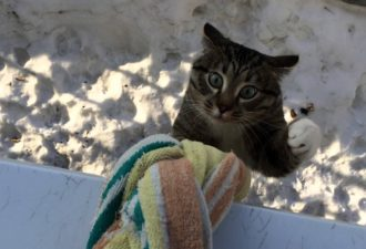 Носки кот падает
