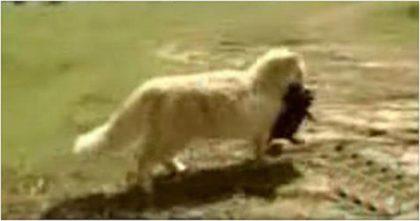 Они стали свидетелями того, как кошка украла маленького щенка. А вскоре выяснилась правда