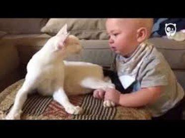 Малыш схватил кошку за задние лапы. Мама сняла все на видео, и теперь весь мир смотрит, не отрываясь