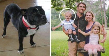 Семейная собака потащила мужчину к воде. То, что он там увидел…