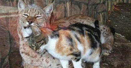 Бездомный кот пробрался в зоопарк и завел себе необычного друга