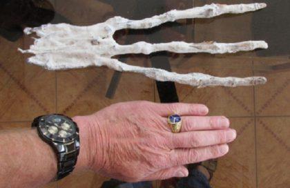 Рука Мумии найдена в Перу